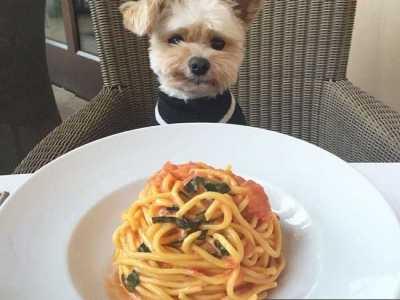 芹菜狗狗能吃吗 10种狗狗能吃的蔬菜